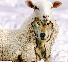 Λύκοι θα υπάρχουν… όσο υπάρχουν πρόβατα!!!